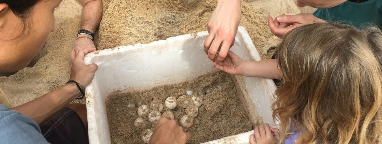 Allegra and I transferring turtle eggs to the hatchery